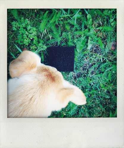 kunstfürhunde
